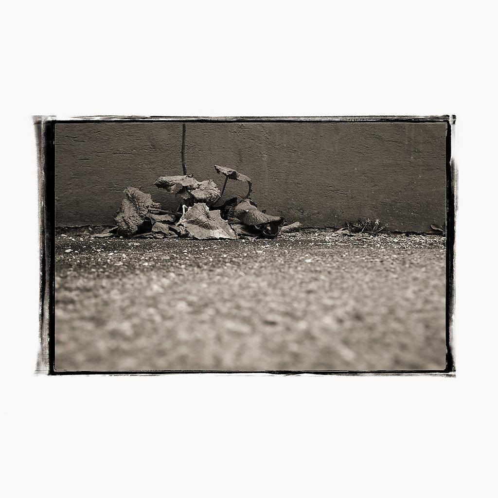 instagram-pflanze-MG-4169.jpg